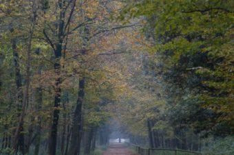 Bosco della Mesola – Uscita fotografica naturalistica
