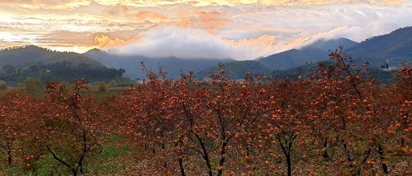 Frutti di Novembre