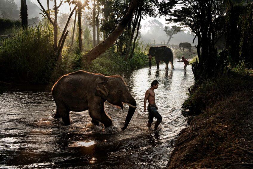 Animals di Steve McCurry a Milano!